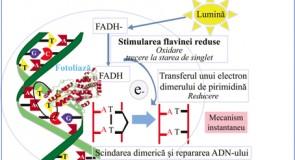 Fotoliaza și filtrele UV în tratamentul keratozelor actinice