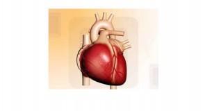 Rolul coronarografiei si al procedurii coronariene interventionale in diagnosticul si tratamentul bolii coronariene ischemice