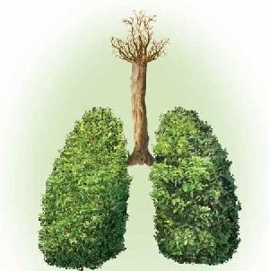 Fitoterapia- rolul ei în susţinerea imunităţii şi a sănătăţii aparatului respirator